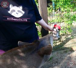 Tapir (4)