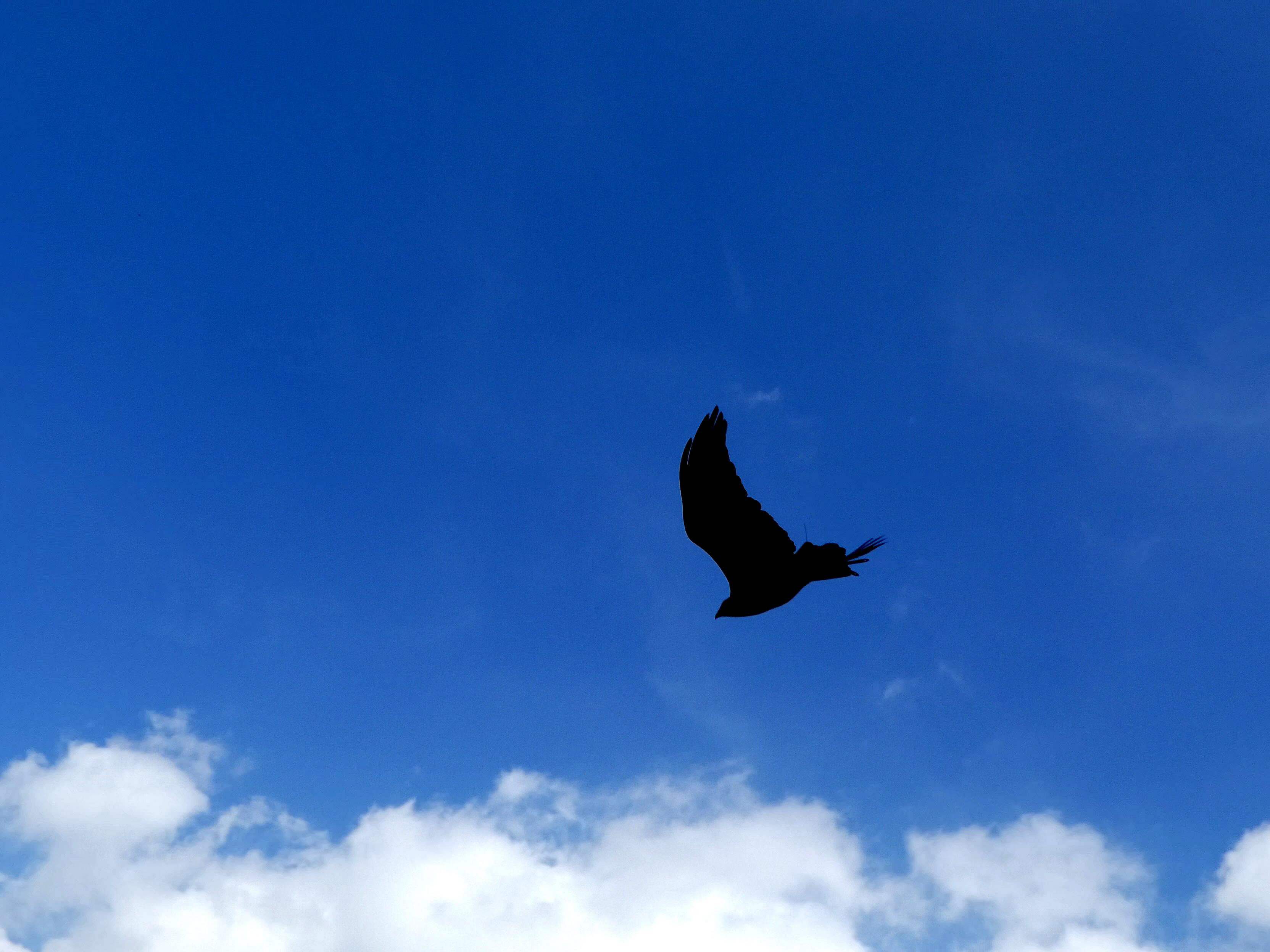 Greifvogel  (10)