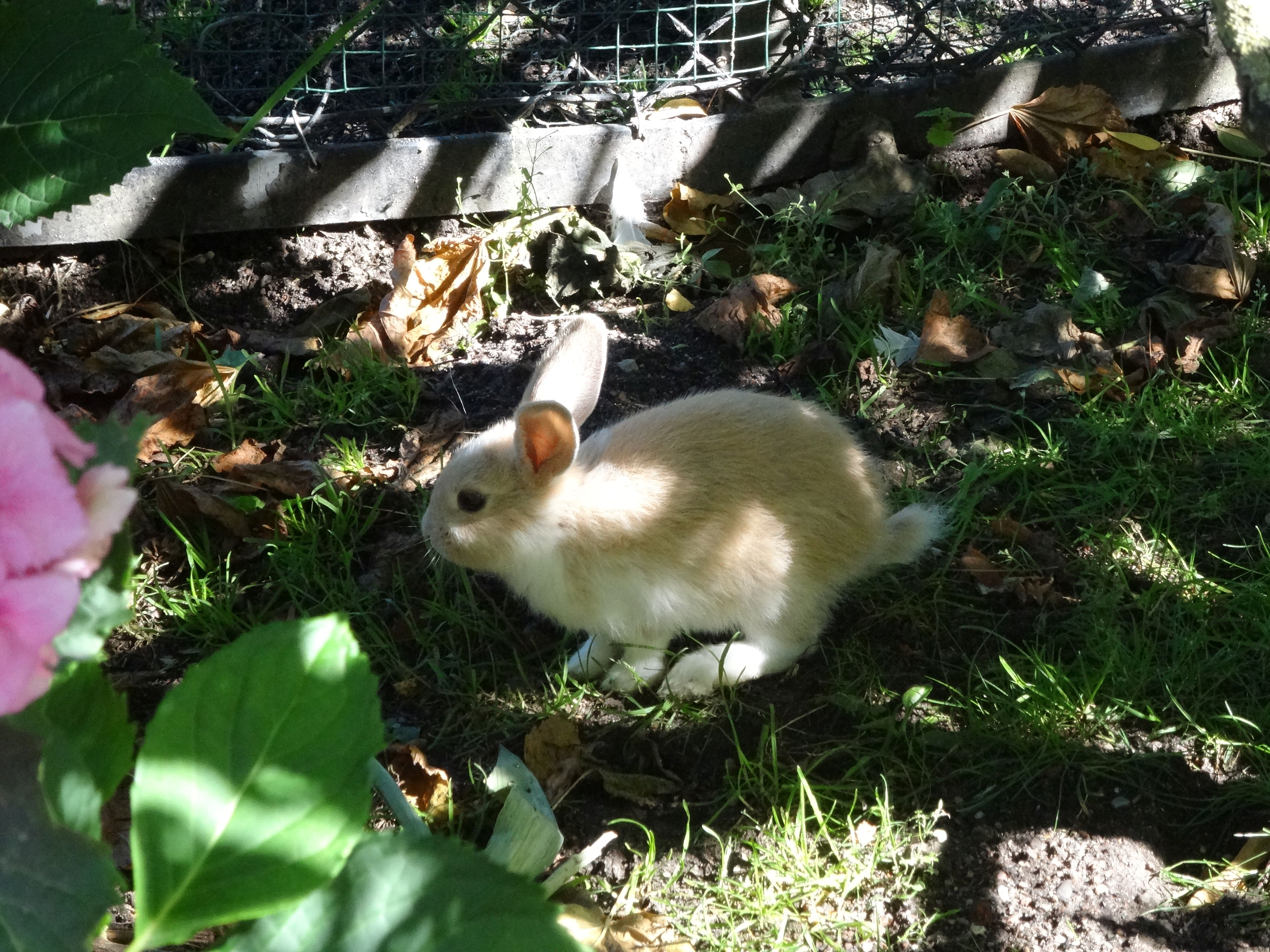 Kaninchen  (2)