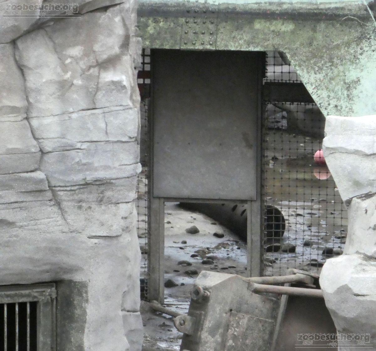 Eisbärenanlage Schieber