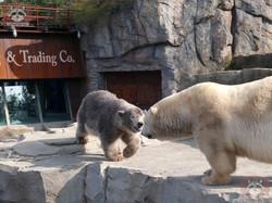 Eisbären_Milana_und_Nana_(16)