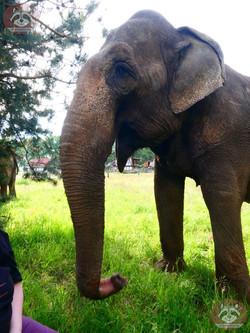 Elefanten (15)