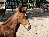 Pferd  (5).jpg
