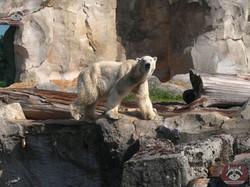 Eisbär Loyd (4)