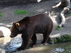 Bär  (4)