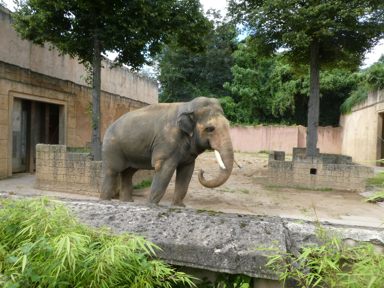 Elefanten  (36)