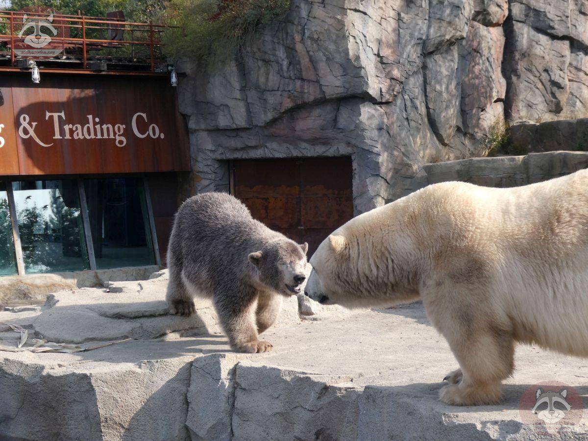 Eisbären_Milana_und_Nana_(15)