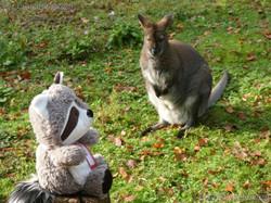 Wuschel und das Bennetkänguru