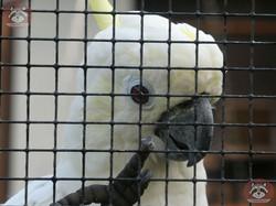 Kakadu (2)