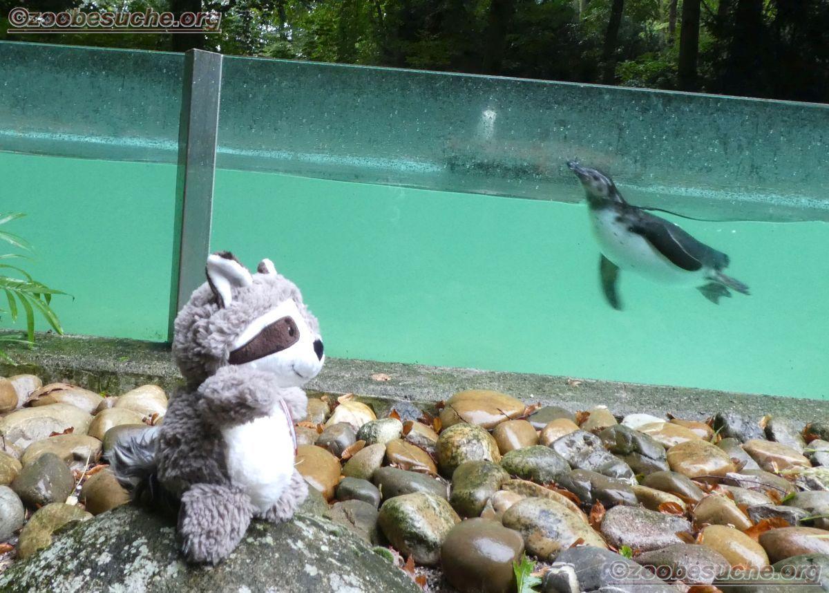 Pinguin mit Wuschel  (3)
