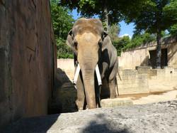 Elefanten  (10)