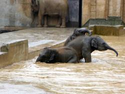Elefanten  (17)