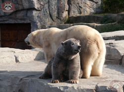 Eisbären_Milana_und_Nana_(27)