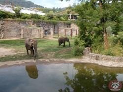Elefantenanlage (5)