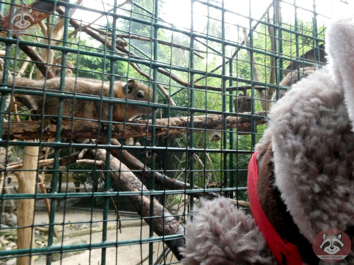 Chinesisches_Baumstreifenhörnchen_mit_W