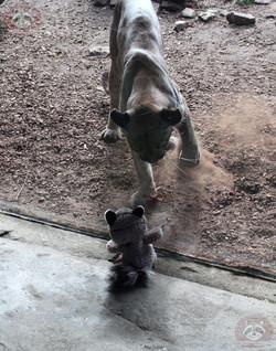 Wuschel mit Puma (6)