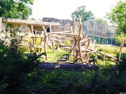 Flachland Gorilla  (18)