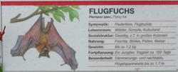 Flugfuchs