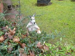 Kanguru  (2)