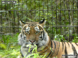 Tiger Stormi  (5)