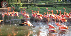 Flamingos (3)