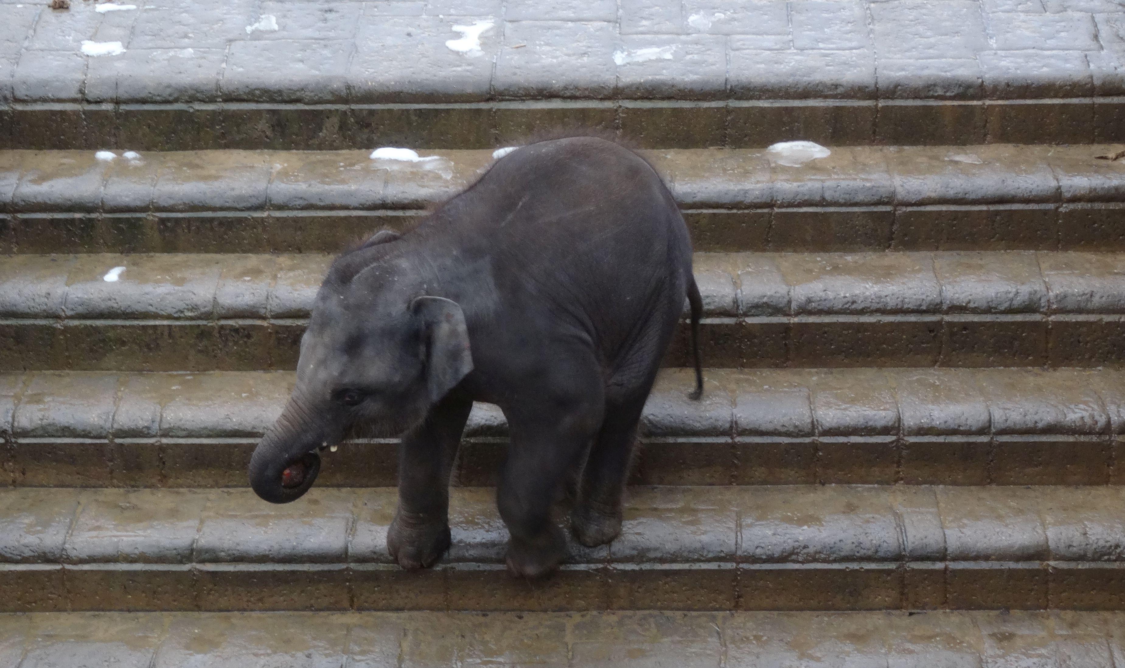 Elefant  (17)