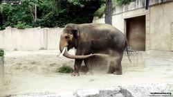Elefantenbulle Nikolai  (9)
