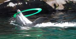 Delfin 11