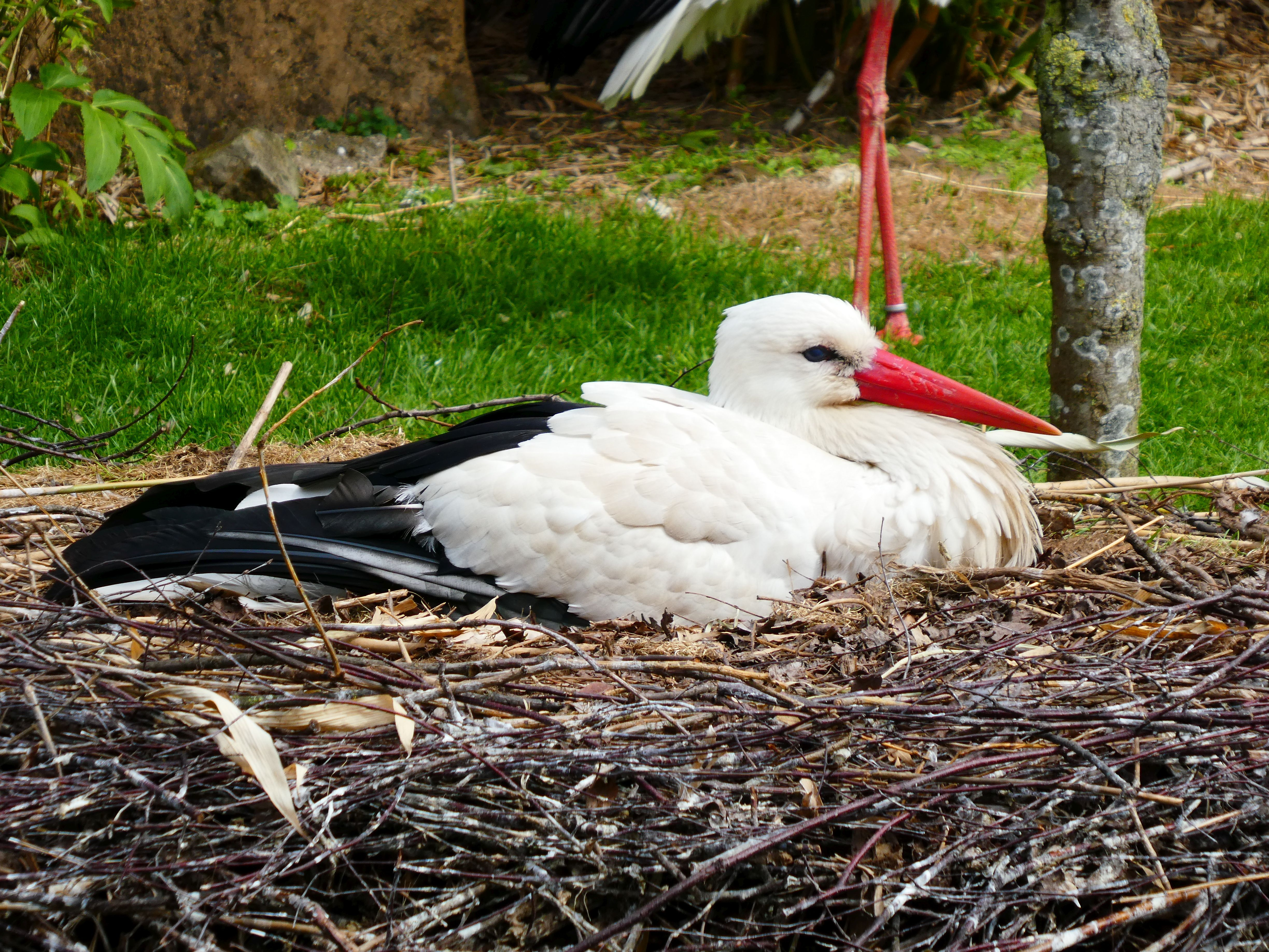 Storch  (3)