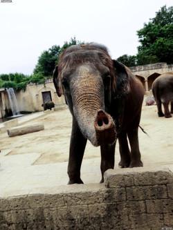 Elefanten  (7)