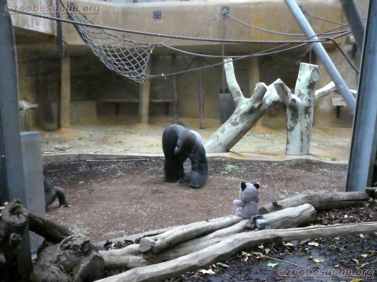 Wuschel mit Gorilla  (4)