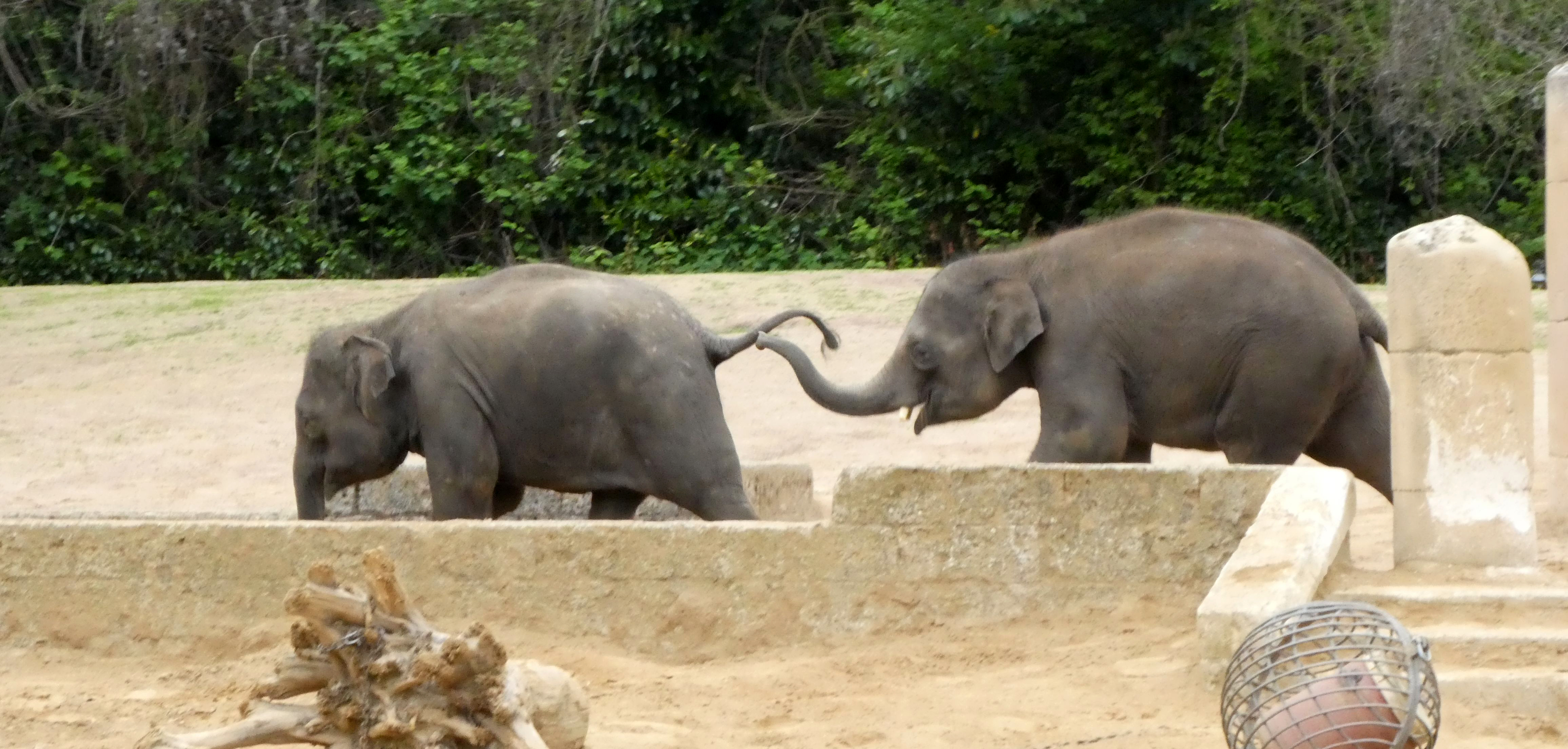 Elefanten  (24)