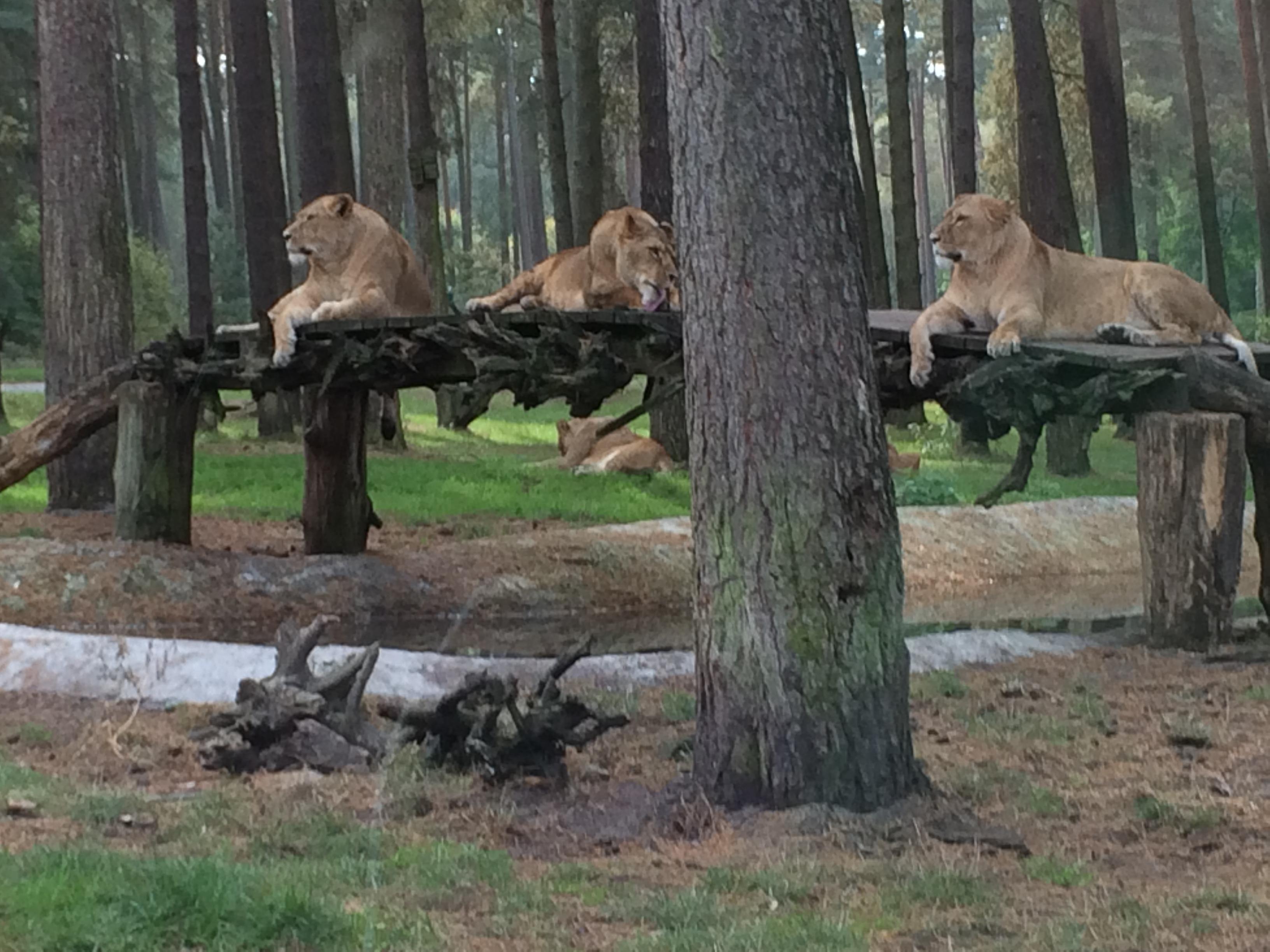 Serengeti Park 232
