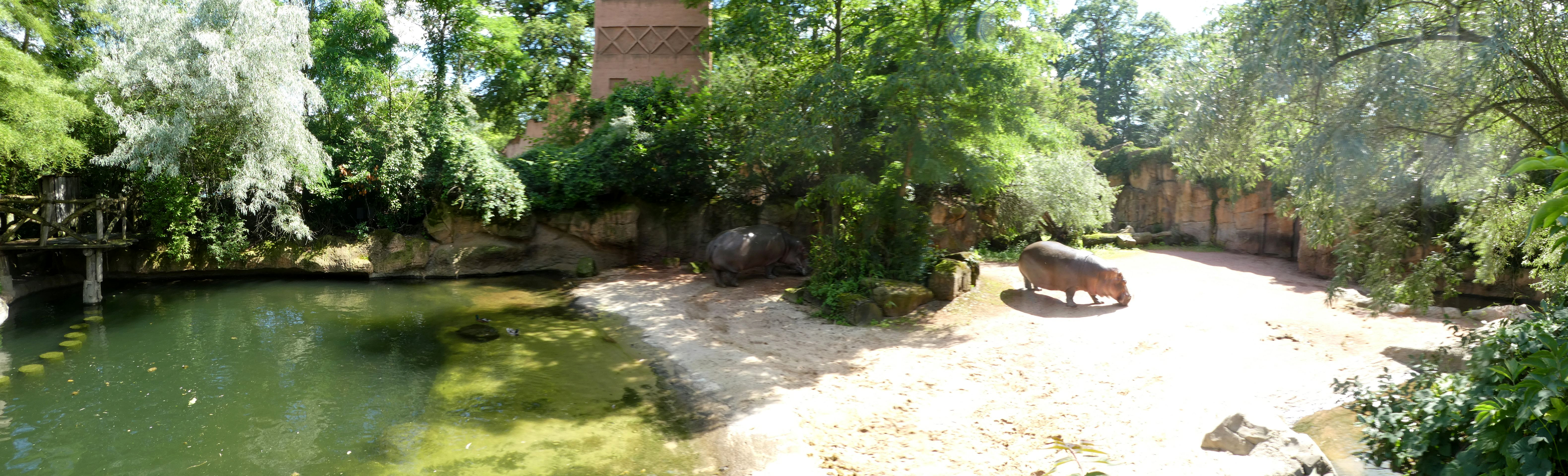 Flusspferd  (9)