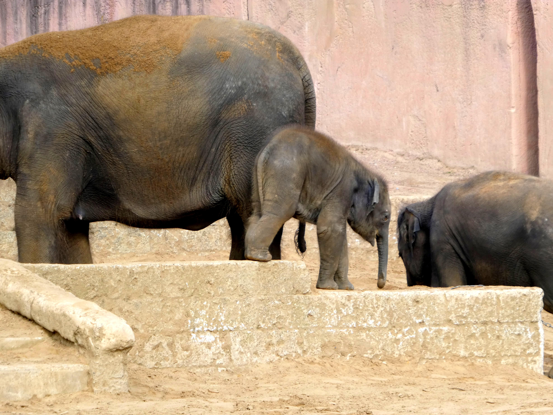 Elefanten  (3)
