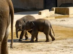 Elefanten  (16)