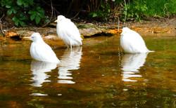 Vögel (2)