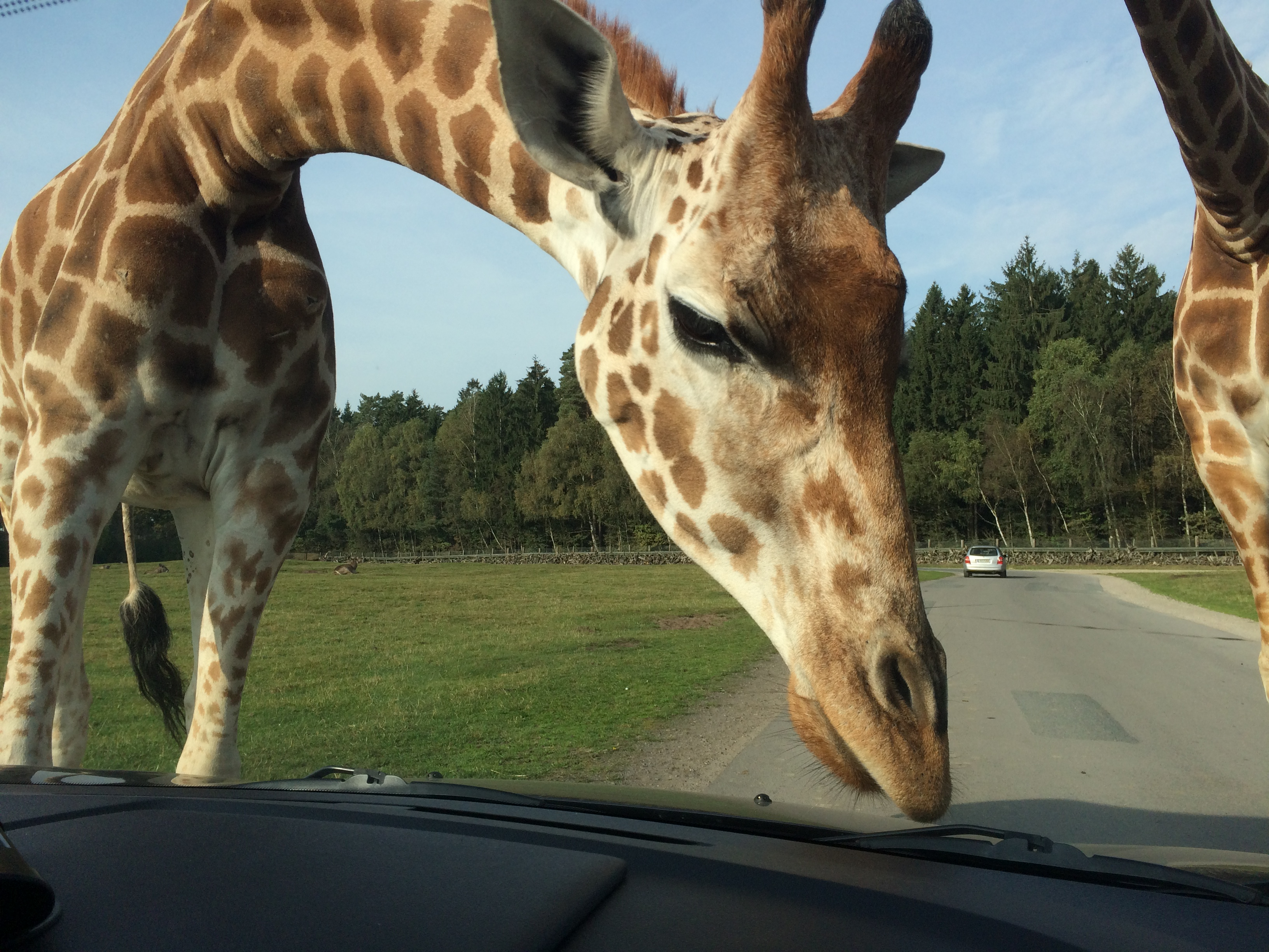Serengeti Park 019