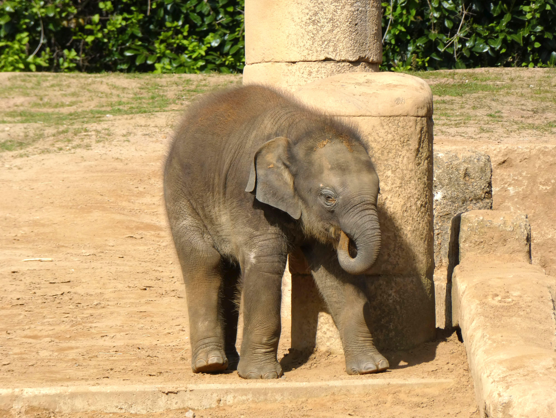 Elefanten  (6)