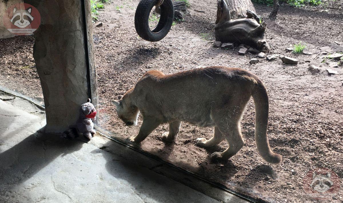 Wuschel mit Puma (2)