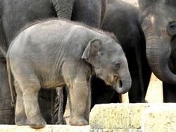 Elefantenbaby  (3)