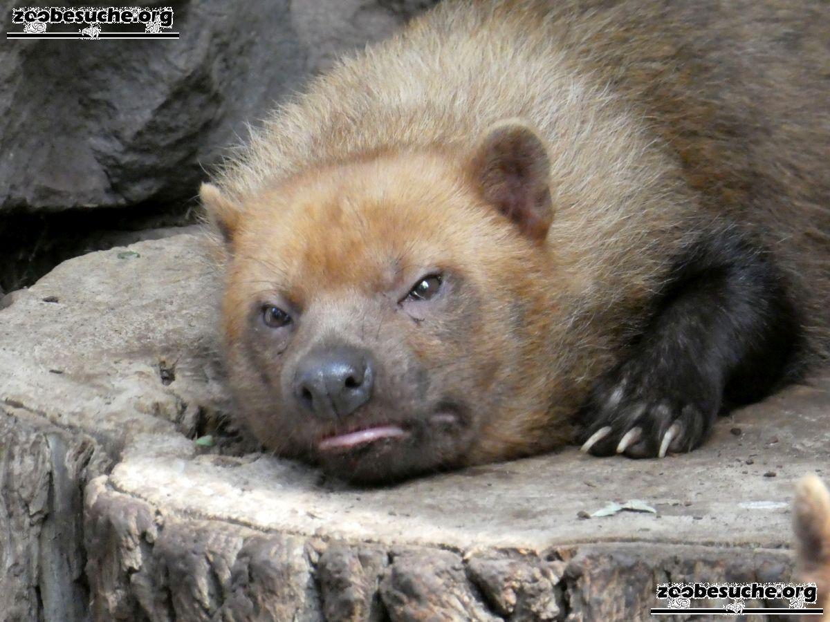 Waldhund  (4)