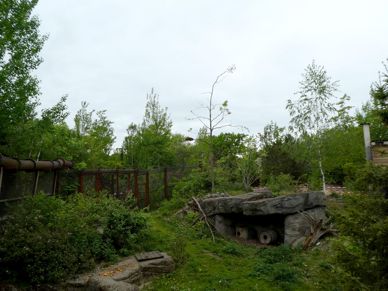 Waschbär  (3)