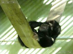 Schimpansen  (5)