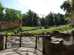 Gorillaberg
