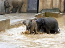 Elefanten  (20)