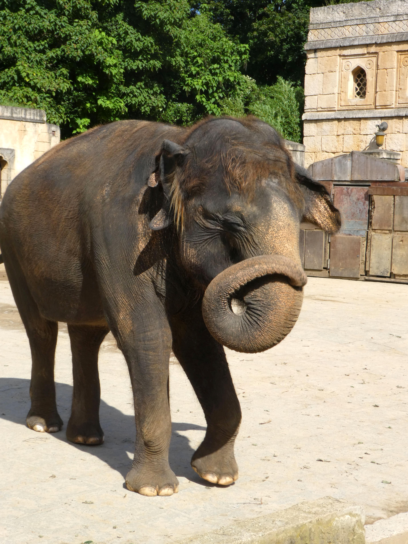 Elefanten  (33)