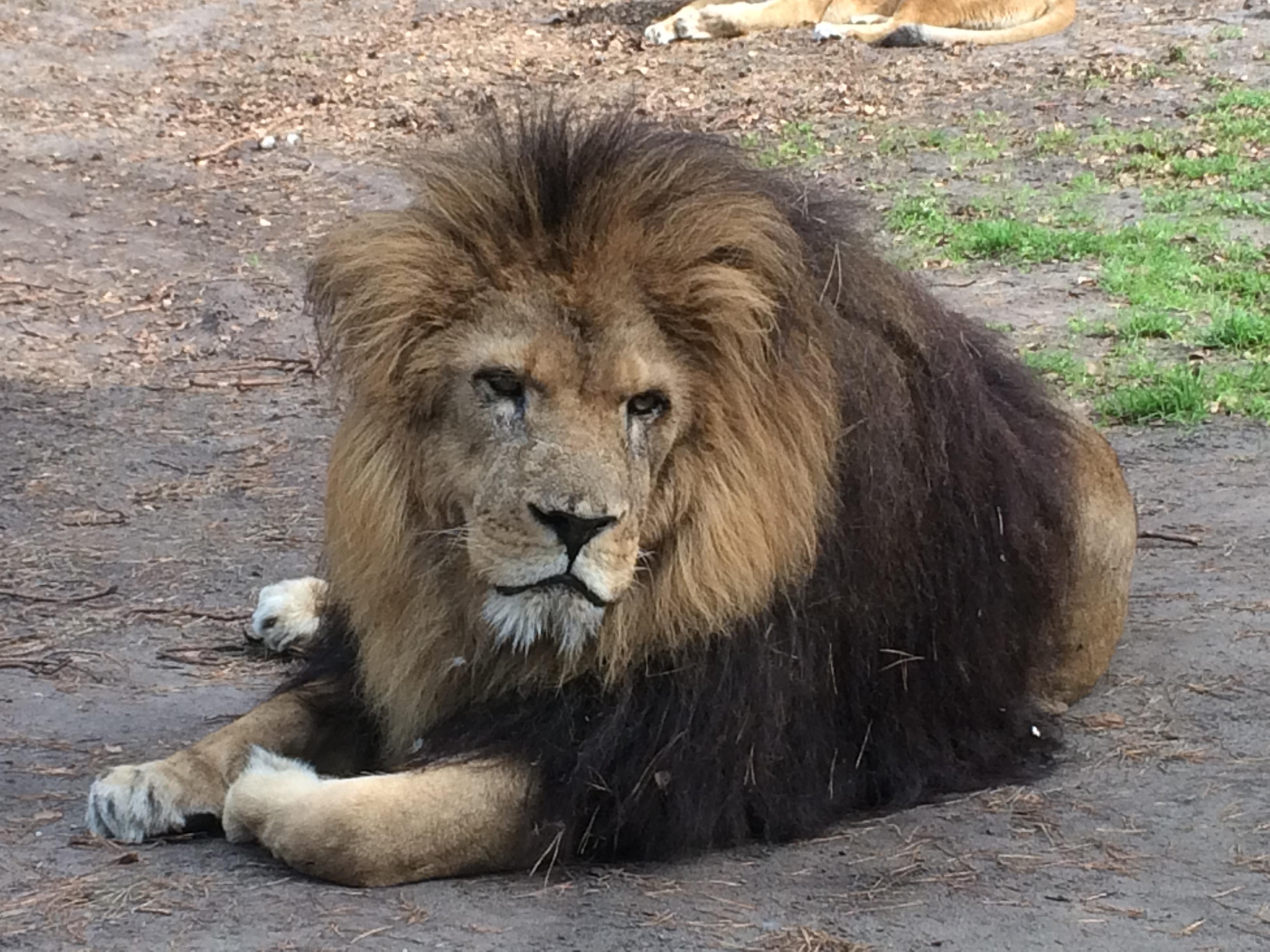Serengeti Park 223