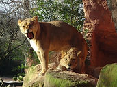 Löwen  (14).jpg