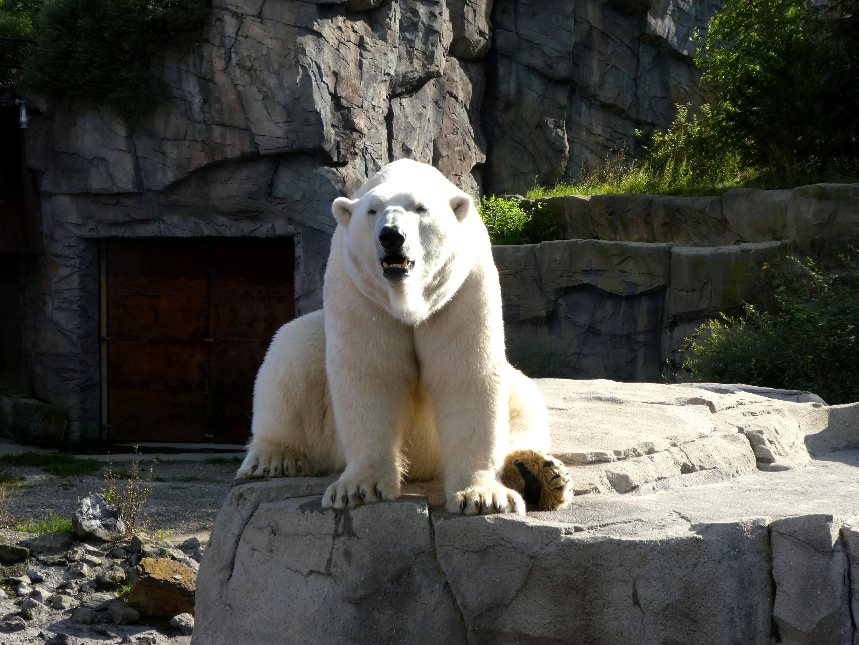 Eisbär  (6)